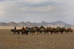 Kazakh nomads moving ther yurts
