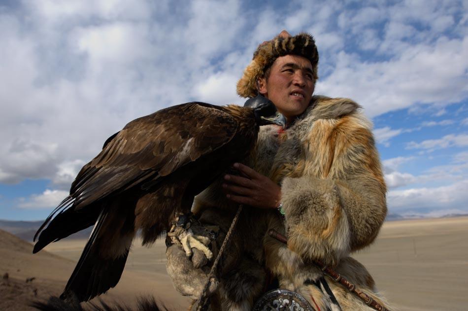 Mongolia Falcon
