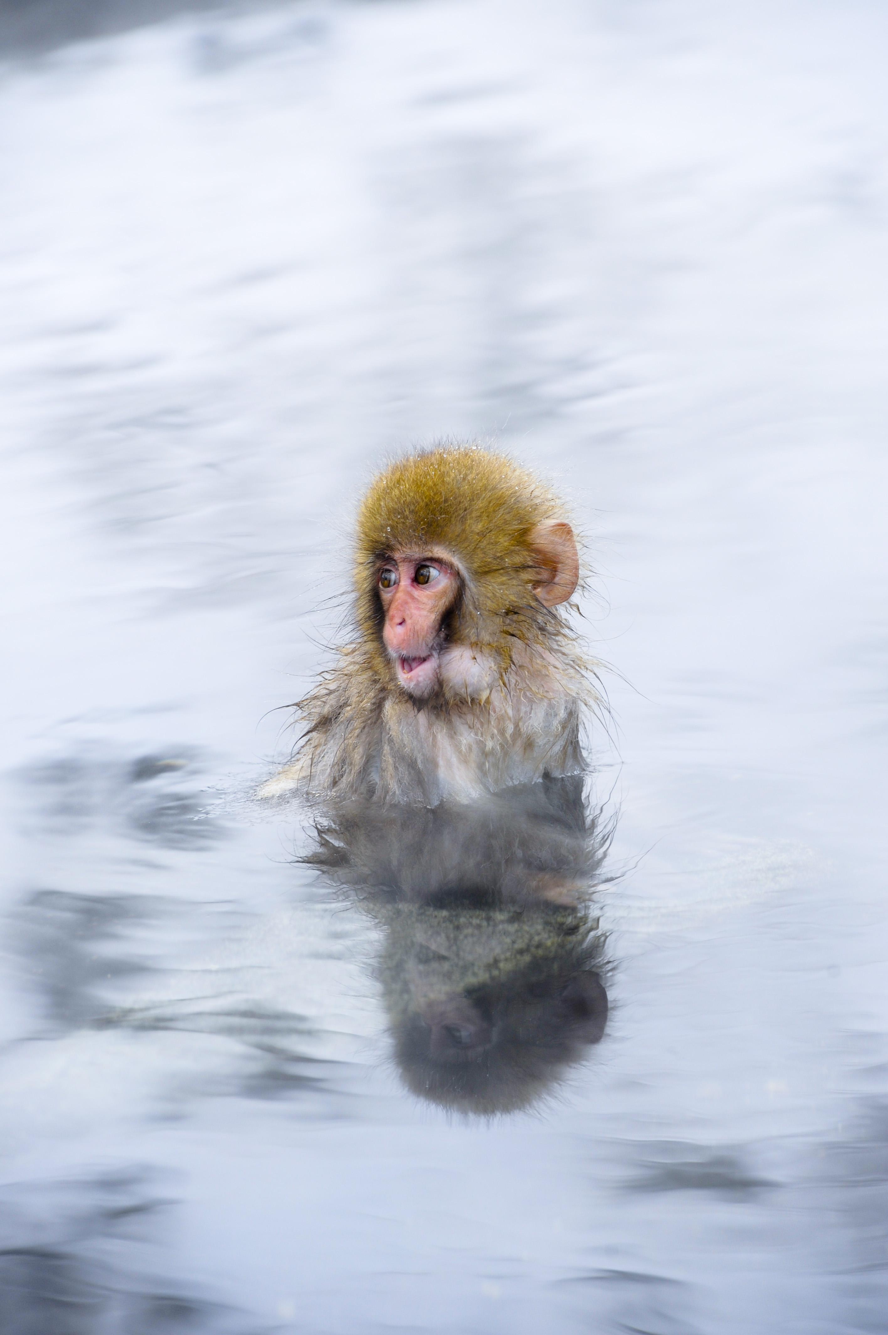 Documentary Galleries: Japan: Snow monkeys, Hoshinoya