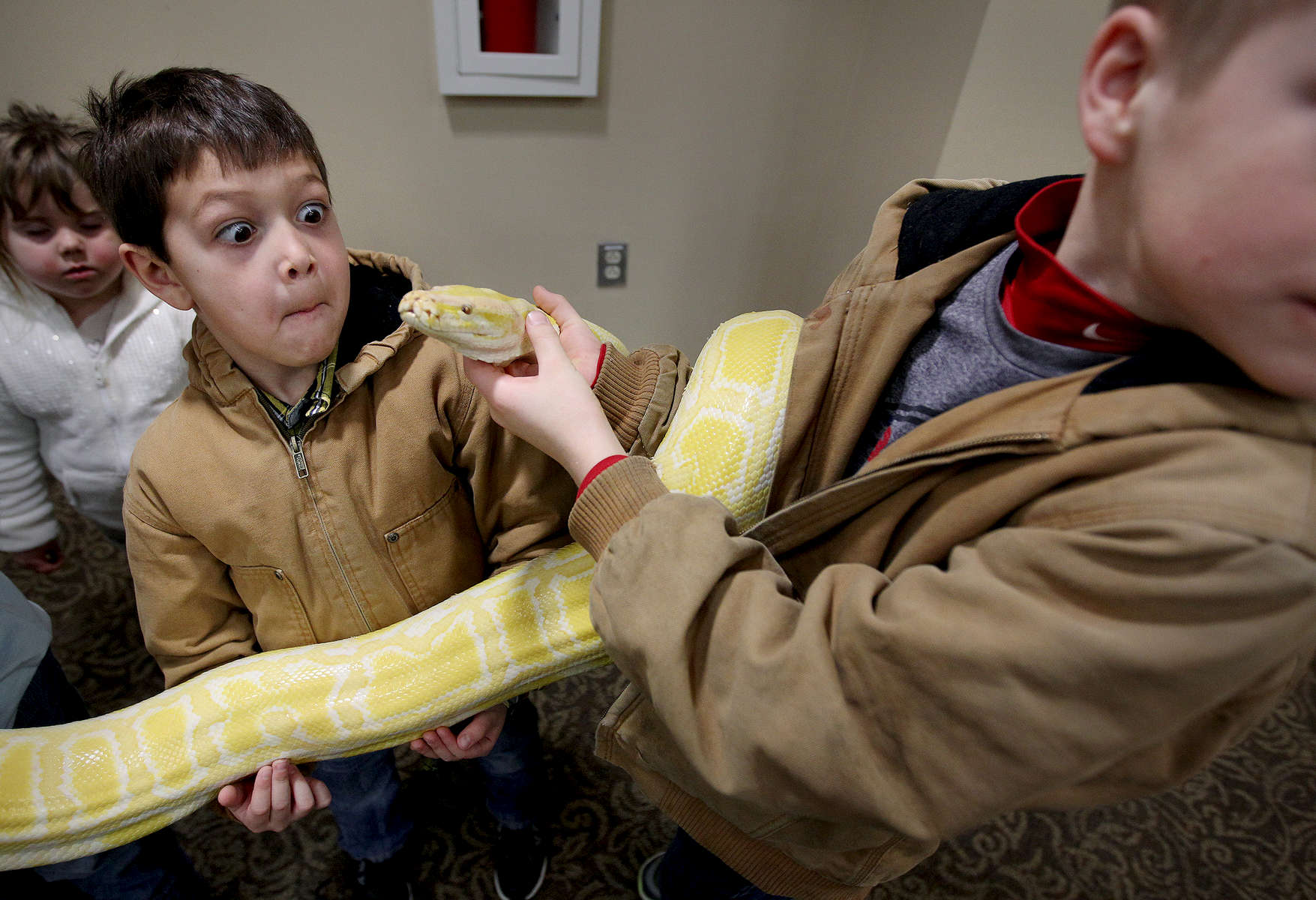 January 24, 2016 - Xanden Hanners, 6, can't hide his trepidation as he comes face-to-face with Bama-Cakes, a 45 pound, ten and half-foot-long, three-year-old, female Burmese Python, during Repticon Memphis at the Landers Center in Southaven. Hundreds of of different snakes, frogs, lizards, spiders and other assorted exotic pets were on the display for reptile enthusiasts. (Mike Brown/The Commercial Appeal)