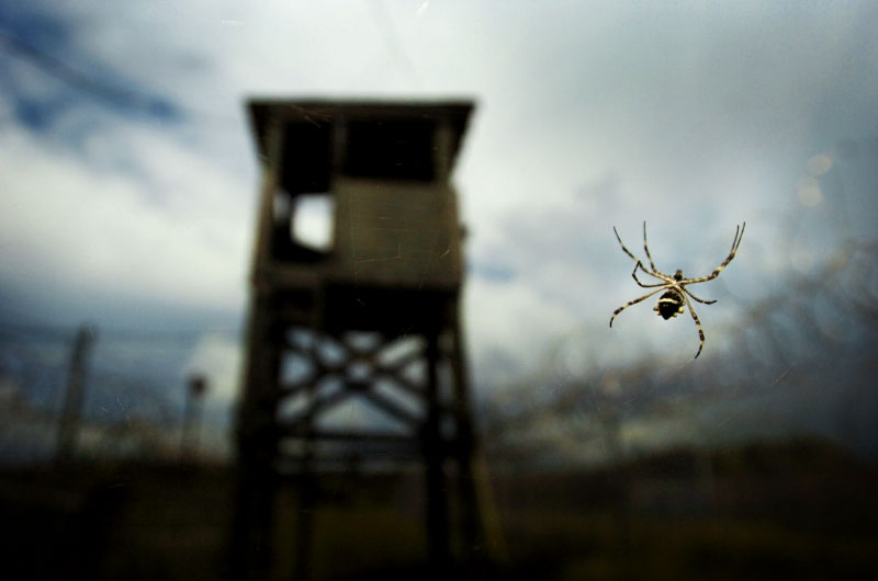 A spider sits in its web near a dilapidated guard tower overlooking Camp X-Ray on the United States Naval Station in Guantanamo Bay, Cuba. In 2002 Camp X-Ray was used to house detainees captured on the battle fields of Afghanistan, but was closed in November 2002 after only four months of use once construction on Camp Delta was completed. (© Mike Brown)