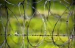 A Cuban Grassquit sits on the barbed wire surrounding the perimeter of Camp X-Ray on the United States Naval Station in Guantanamo Bay, Cuba.(© Mike Brown)