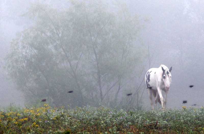 September 21, 2011 - A horse strolls through its pasture as a heavy fog settles over the Memphis area early Wednesday morning. (Mike Brown/The Commercial Appeal)