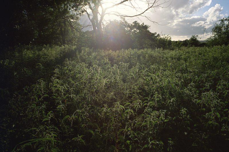 SV042-_Wormingford_-2013_