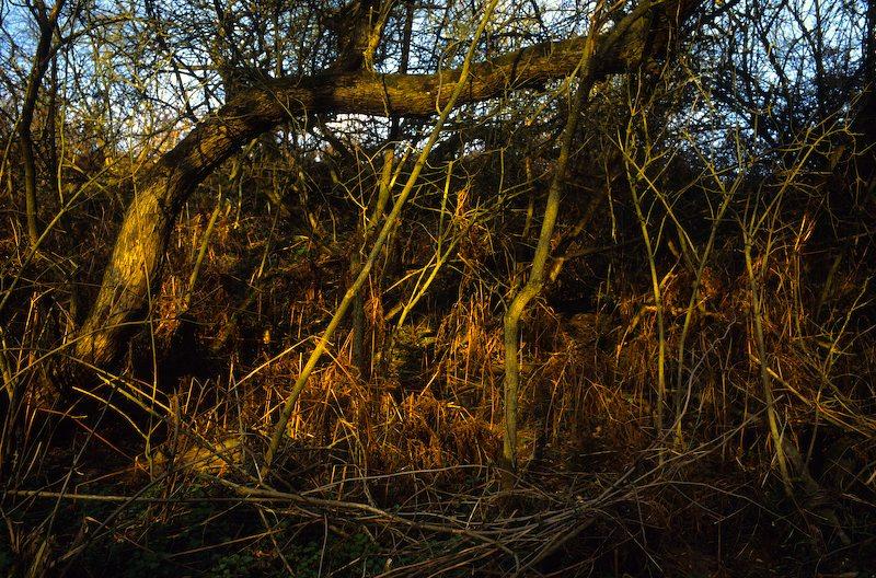 Trees08
