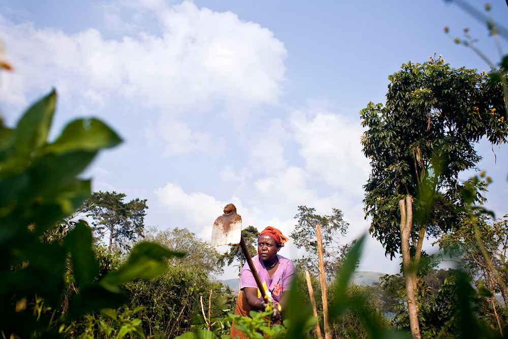 CARE International programme member, tending crops planted according to higher yield methods designed by the nonprofit.