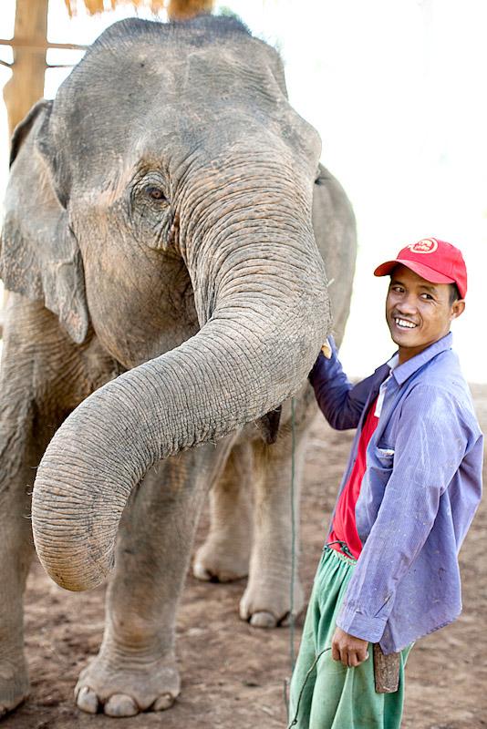 Elephant and mahut - Elephant Conservancy Center
