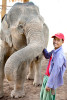 Elephant and mahut - Elephant Conservancy Center
