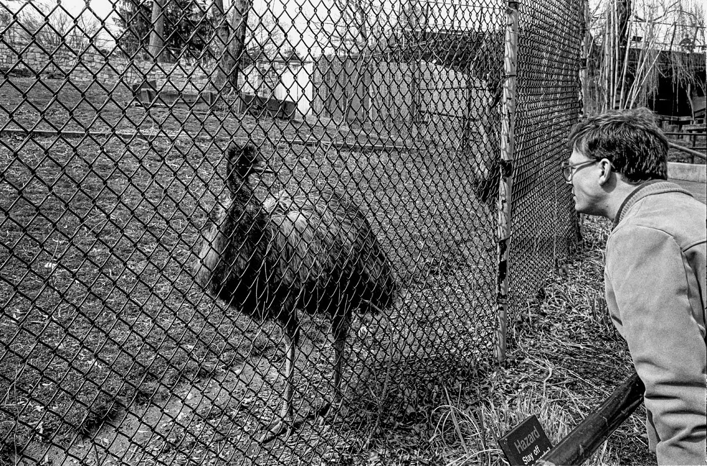 Emu, National Zoo, Washington, DC