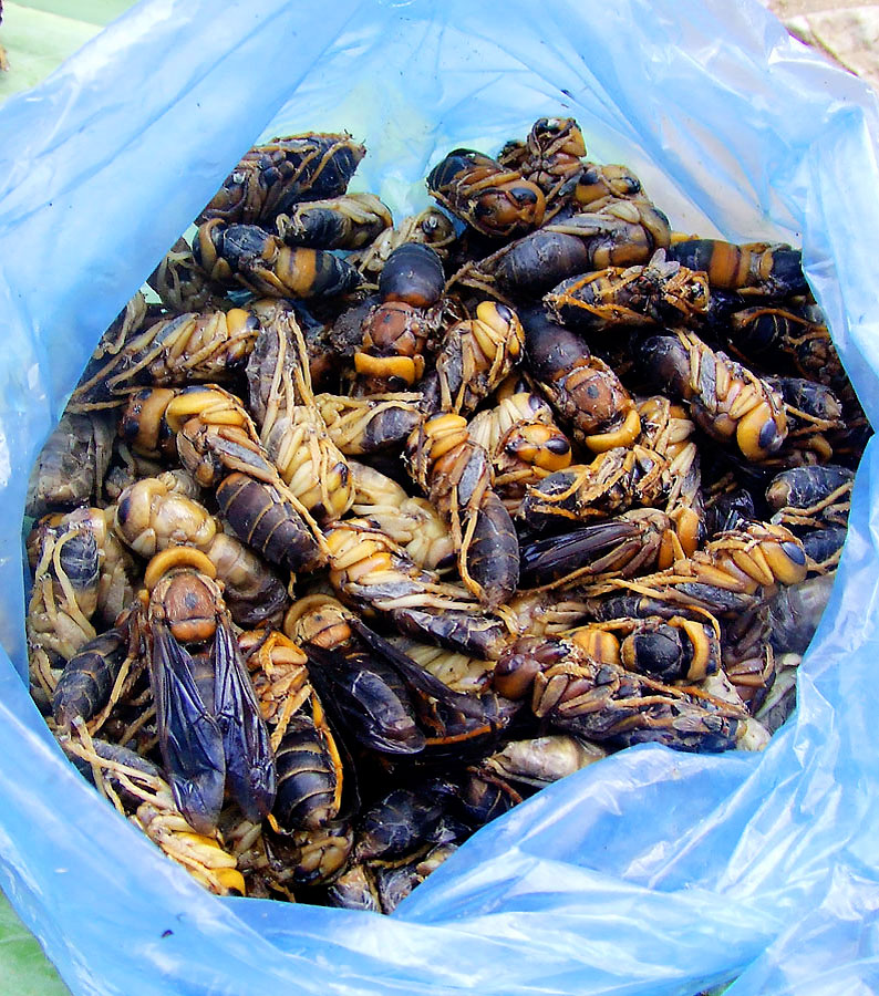 Large Bees for YouLuang Prabang, Laos
