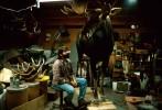 WA_web_moose