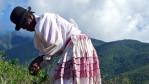 A 71-year old Afro-Bolivian woman is bent over slightly as she picks coca leaves; she's wearing a bowler hat and clothing normally associated with the indigenous.