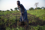 A seven-year old girl is standing while using a long-handled garden tool in a cassava field.