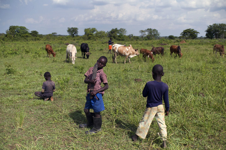 Three very young boys (one cradling a machete) are standing in the foreground of a vast green field, as their family's cattle graze in the background.