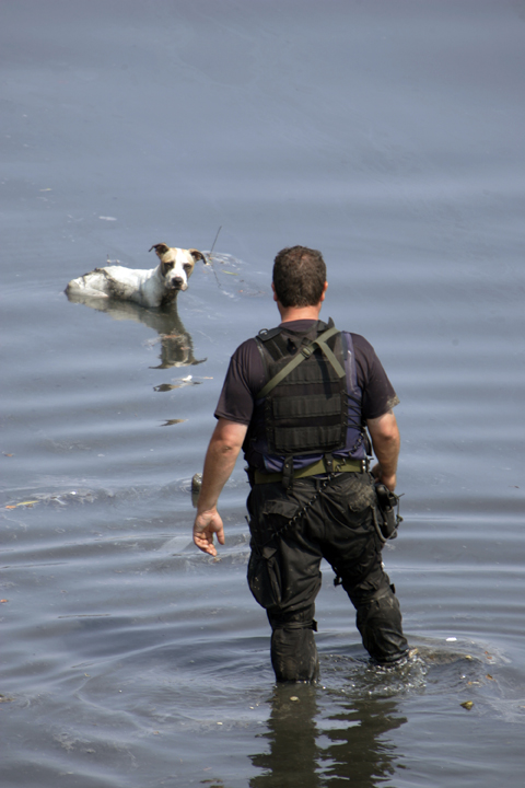September 10, 2005 - New Orleans, Louisiana - John Jones, of the New Orleans Harbor Police, cautiously approaches a dog stuck in mud in the Industrial Canal; he rescued the dog.