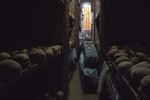 A casket, holding the remains of numerous victims, is displayed in the middle of a very narrow and dark room; the walls on both sides of the room are layered with skulls.