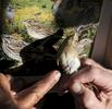 bird-banding