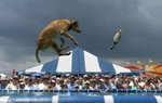 Bailey, a 4-year-old yellow lab, leaps after a rubber duck thrown by April Schortz during the Splash Dogs competion in Laishley Park Sunday, May 6, 2007. Bailey's jump was 17 feet and 1 inch.