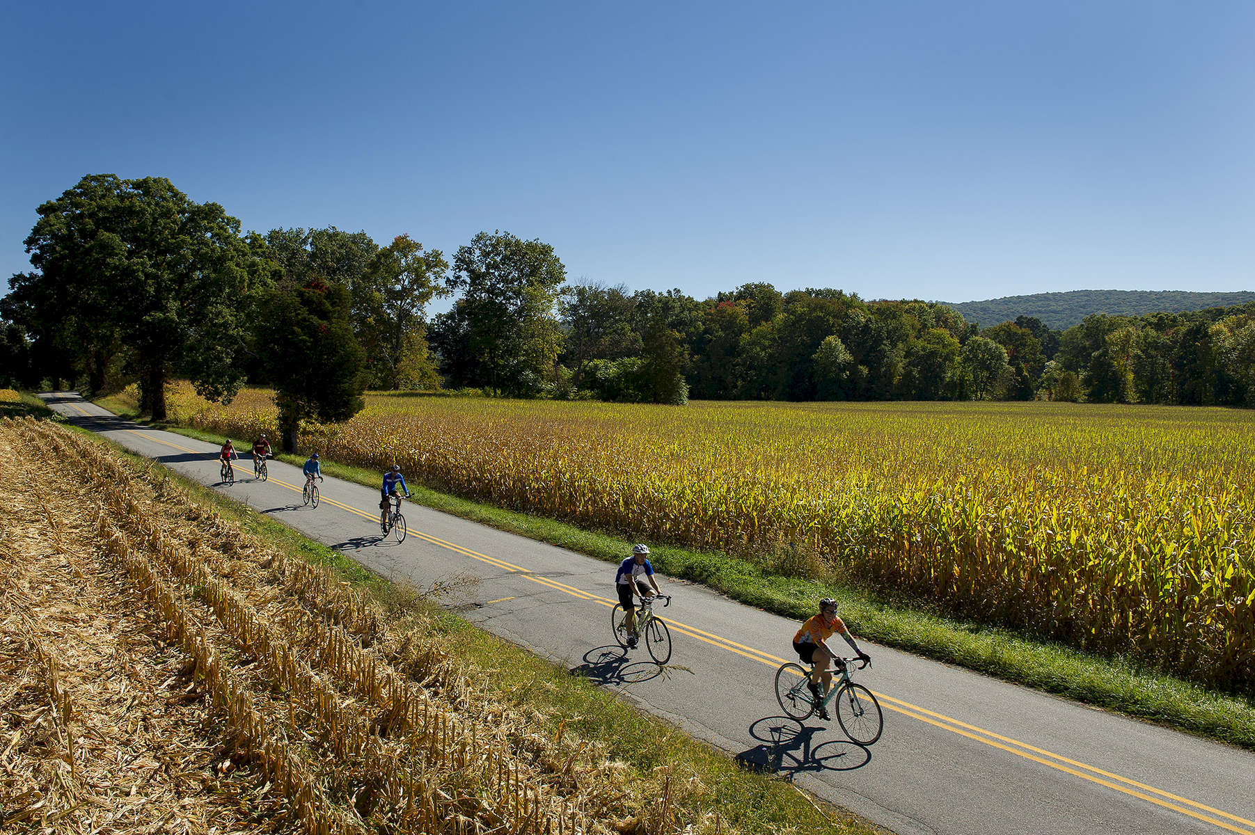 GREEN TWP., NJ    USA  (09/27/2014)   Cyclists ride between corn fields on Maple Lane in Green Twp., NJ. Participants of The Tour de Farm, a {quote}cycling and culinary experience{quote}  bicycle and partake in food sampling throughout a 35 mile ride Saturday morning, September 27, 2014. The riders, estimated from 300-350 for the {quote}Weekend Warrior{quote} ride, bicycle from farm to farm sampling local foods, culminating in a celebration dinner  near the apple orchards at the Race Farm.  A large buffet style dinner, hosted by well know chefs from NJ and NYC completes the day.  Live music, local wine and Oysters from Barnegat Bay complement the afternoon's dinner celebration.    Matt Rainey for The New York Times