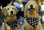 Max and Boomer, Peter LaPlaca's dogs from Pittstown, NJ , are all smiles prior to the start of The annual Flemington Memorial Day Parade. The parade is complete with marching bands, twirlers, fire trucks, emergency vehicles and lots of families enjoying the morning.  Beautiful weather  added to the festivities.