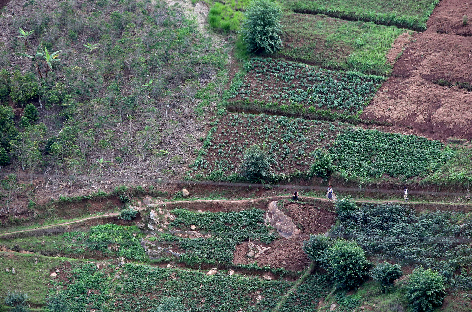 Terrace farming, which helps decrease erosion and surface runoff, is seen on November 15, 2017 in the Rulindo District, Rwanda. Wood gathering causes much of the deforestation and soil erosion in the country. Nearly half of all Rwandans live in poverty, relying on small-scale farming for survival without gas or electricity. With so many women and children spending hours of the day foraging for wood used for cooking and light, often damaging their eyes, lungs, the forests and atmosphere, a little inventiveness helps. Enter cow and enter pig — not just as a source of food, but also the heat needed to cook it. Or more specifically, their poo — the fuel fed to a biogas digester, a tank that coverts organic waste into methane. Photographs by: Yana Paskova
