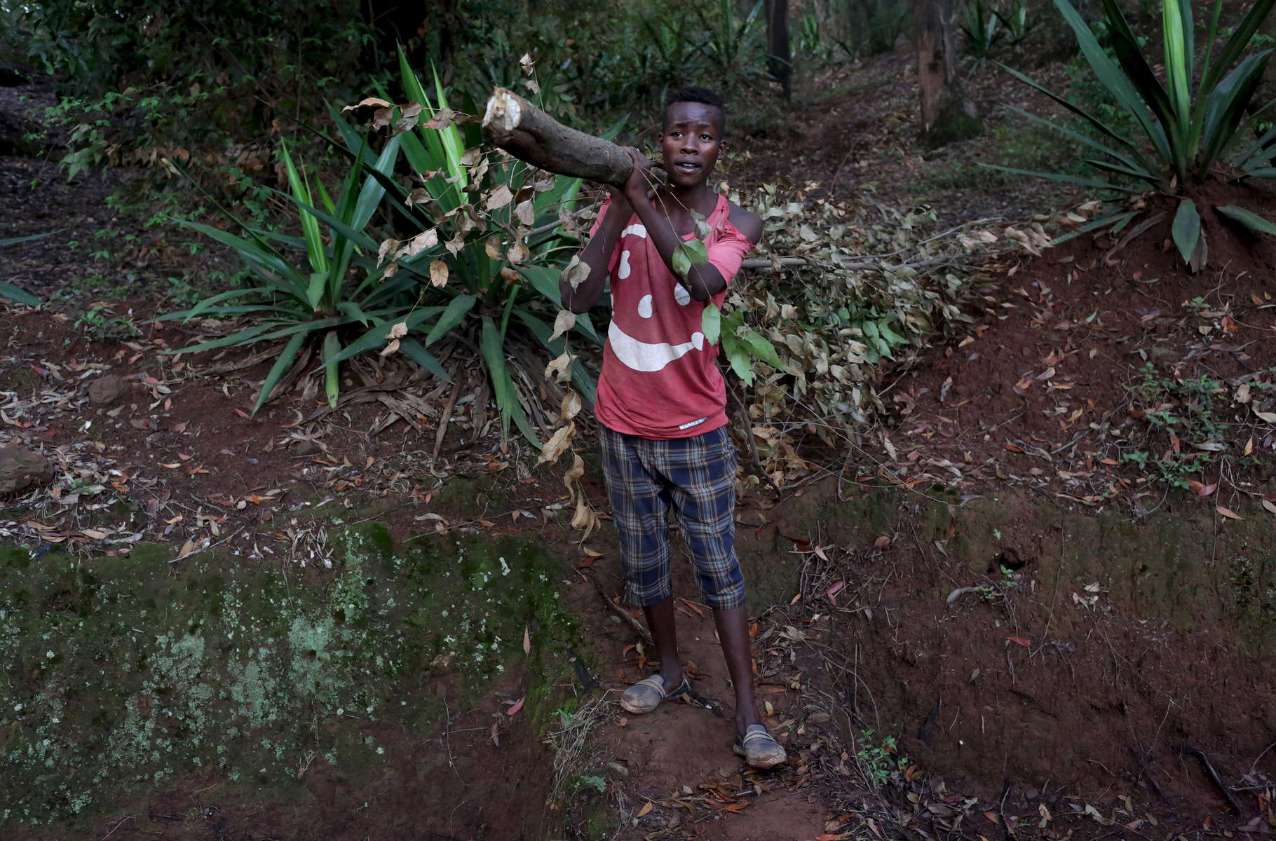 Gakuru Yassin, 21, carries a branch found in the forest to be used as wood for cooking on November 13, 2017 in Mount Kigali, Rwanda. Nearly half of all Rwandans live in poverty, relying on small-scale farming for survival without gas or electricity. With so many women and children spending hours of the day foraging for wood used for cooking and light, often damaging their eyes, lungs, the forests and atmosphere, a little inventiveness helps. Enter cow and enter pig — not just as a source of food, but also the heat needed to cook it. Or more specifically, their poo — the fuel fed to a biogas digester, a tank that coverts organic waste into methane. Photographs by: Yana Paskova