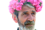 Yonko Yonkov, 65, wears a rose garland he makes for guests to the garden while picking roses in his rose gardens in Osetenovo, Bulgaria on May 29, 2018. He says rose-picking usually starts at sunrise and wraps up before noon. The rose flower is very sensitive, and its oil resides in the top layers of the flower, so it evaporates easily with rising temperatures. Cold dew drops in the morning hinder the evaporation of oil, and the moist air preserves the plant's moisture, turgor and oil content, which is why farmers usually pick the flowers so early.Photo by: Yana Paskova for National Geographic Traveler
