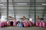 Bags of roses arrive to Lema distillery in Kazanlak, Bulgaria on May 24, 2018. Each of its caldrons has a 5 ton capacity, and it takes 3 to 5 tonnes of roses to produce just 1 kg of rose oil. Lema, a family-owned rose plantation and production facility of over 40 years, produces mainly rose oil, rose water, lavender oil, and souvenirs. Photo by: Yana Paskova for National Geographic Traveler