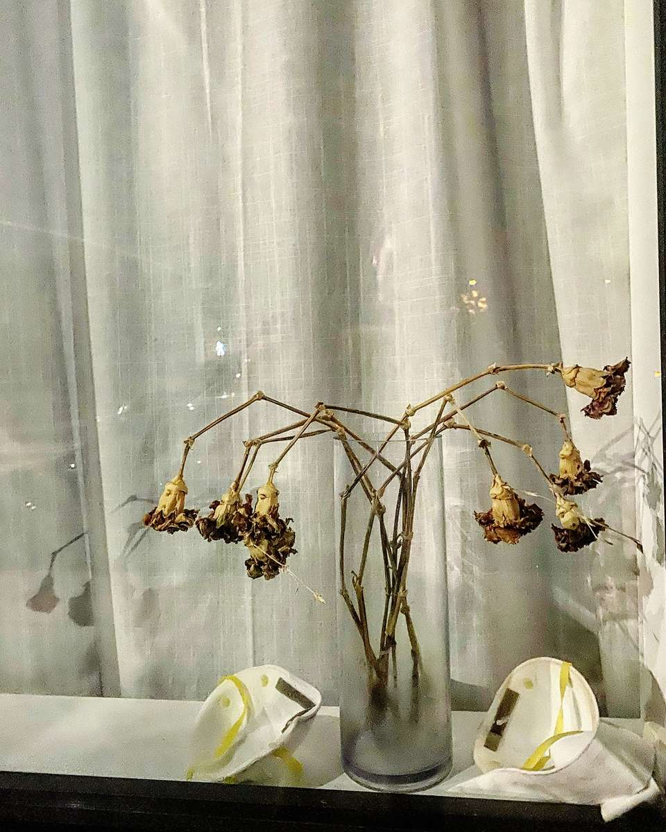 Garden of Eden, Covid Era (through a Brooklyn window, June 2020.)