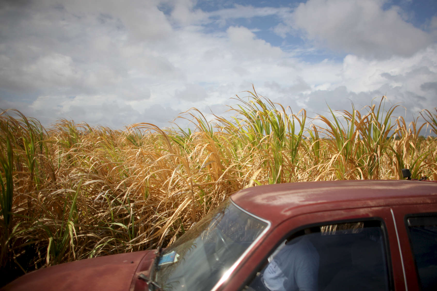 A car passes a sugar field in Barbados on Saturday, April 10, 2010. (For The New York Times)