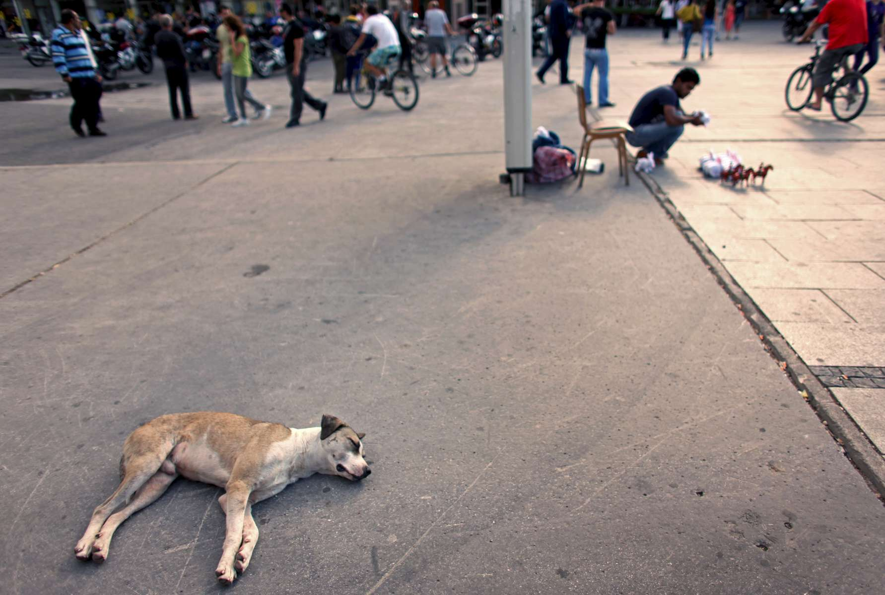 A dog naps in Macedonia Square in Skopje, Macedonia on Sunday, September 05, 2010.  (For The New York Times)
