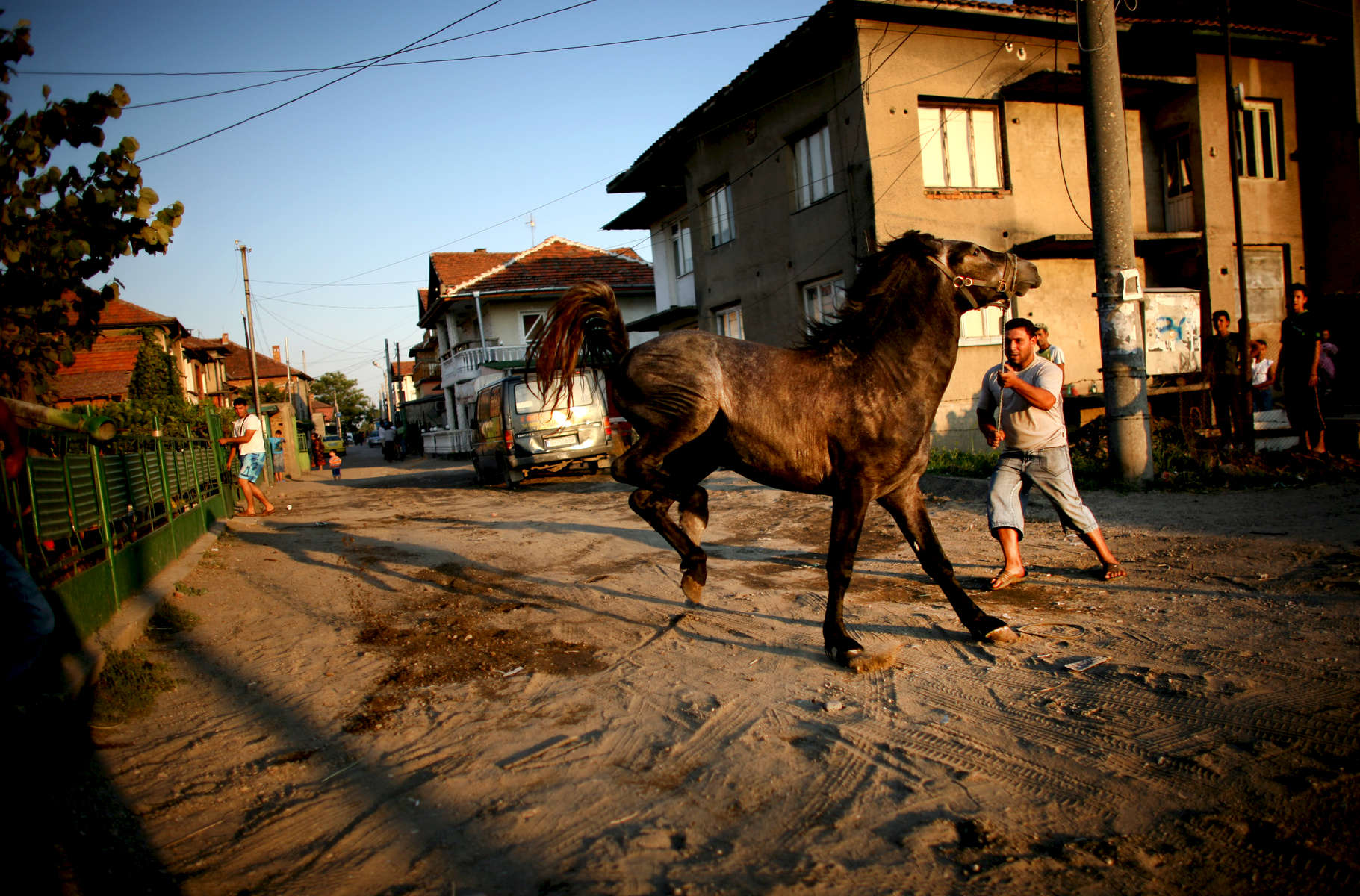 A horse is tamed in a Roma village in Northwestern Bulgaria in August 2008.