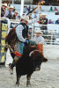 Bull Ride Mania