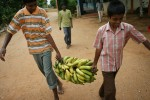 To save as much money as possible, Morning Star grows all of its own fruits and vegetables, including the bananas that Antony, left and Ajith carry in for snack time.