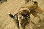 dogfight3