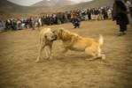 dogfight4