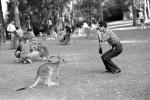 Kangaroo petting park