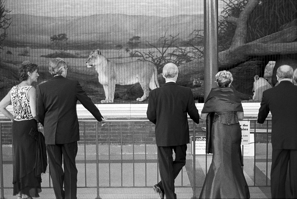 The Lincoln Park Zoo Ball.  The annual black-tie fundraiser event for the zoo.  I was commissioned to create a single image that captured the event from the perspective of a {quote}street photographer{quote} in the classic Henri Cartier-Bresson tradition.