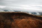 cowspine_04_08