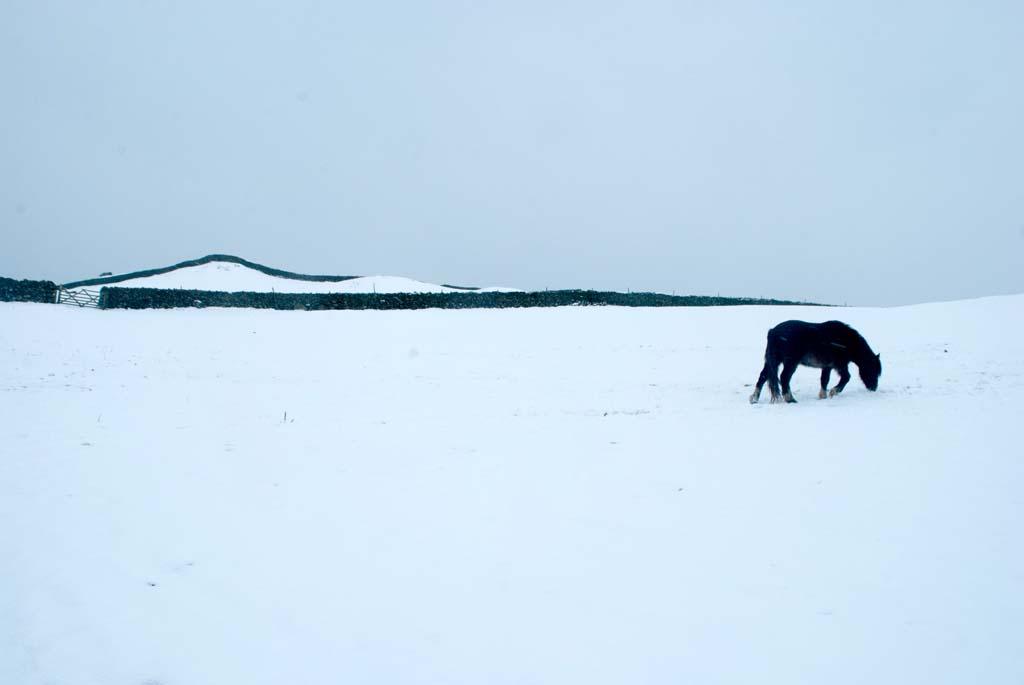 hawes_snowponygraphic_8446s