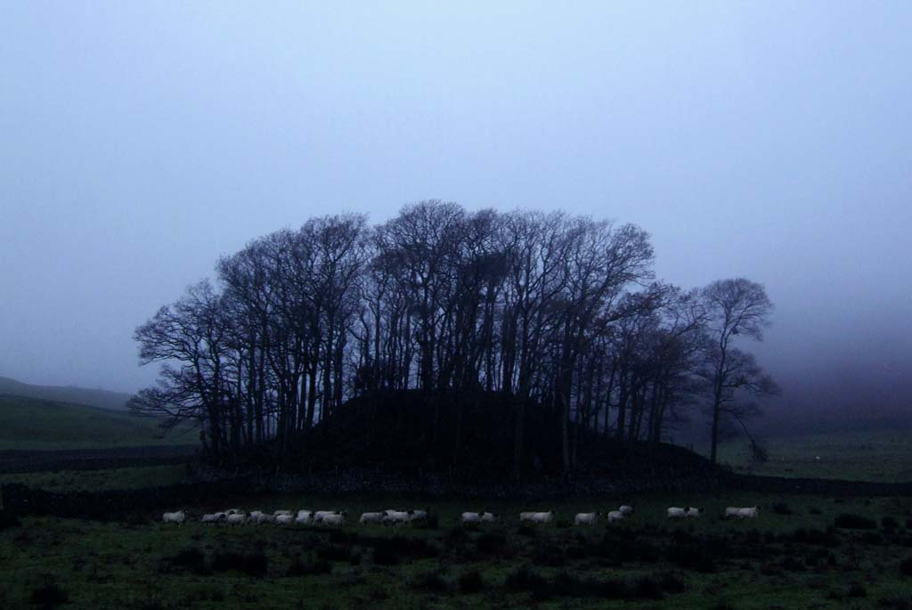 sheep_treefold_b_s
