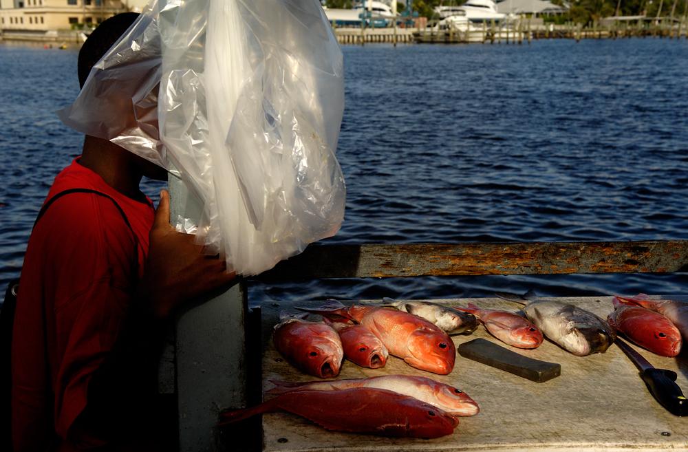 BERMUDA_FISH_TABLE_WEB