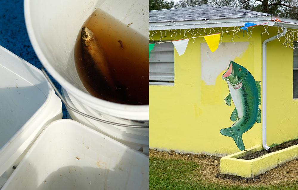 FISH_DIP