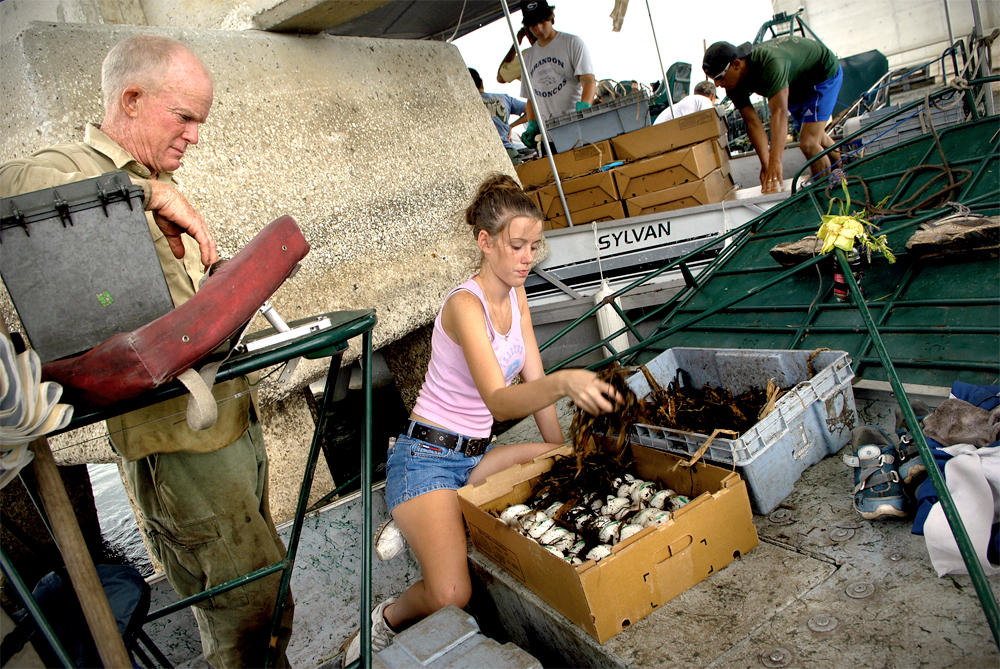 Lindsey Hord, left, watches as Brandi Cox transfers alligator eggs from the collection containers to cardboard boxes after a day of egg collecting on Lake Okeechobee.