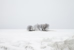 WINTER_COPSE