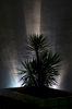 The innovative use of outdoor lighting is apparent throughout this design as it casts hauntingly beautiful shadows as specimen plants take on a life of their own after dark, such as this yucca.