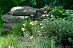 Lollipop Asiatic lilies and Siberian Iris are among the hopefuls stealing the starring role of this layered cottage garden surrounded by heavy river rocks as the backdrop.