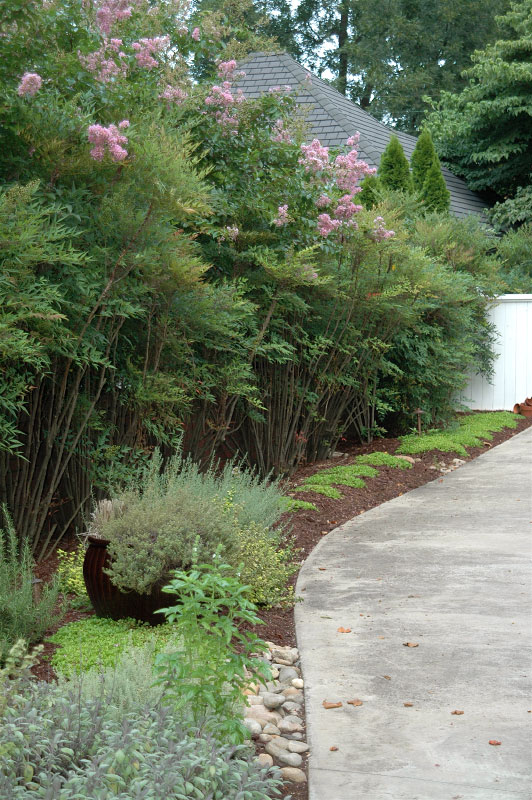 To add interest along the existing driveway, a unique composition of garden pots, herbs, a dry creek feature and mazus groundcovers deliver contrasts of color and green relief in this highly visible spot.