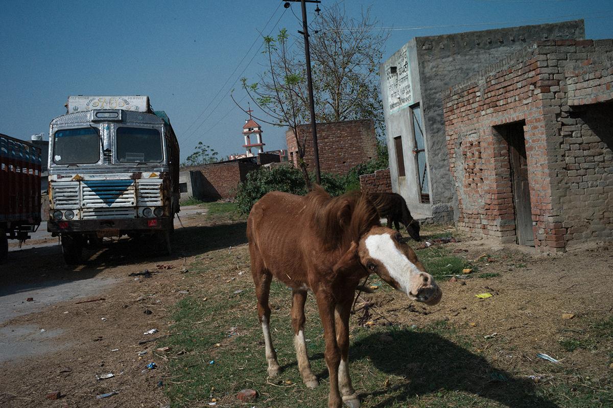 L1524729-caballo-1200