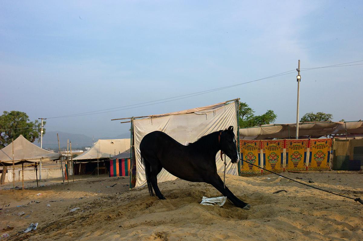 Rajasthan-series-02